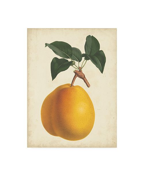 "Trademark Global Horto Van Houtteano Antique Pear Botanical II Canvas Art - 15.5"" x 21"""