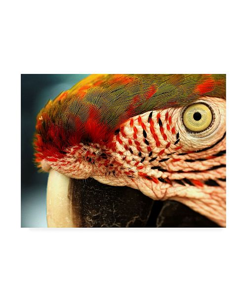 "Trademark Global Dana Brett Munich Polly Red and Green Canvas Art - 19.5"" x 26"""