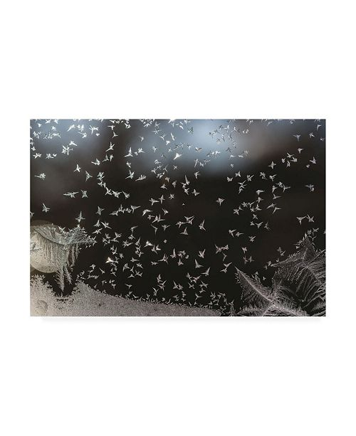 "Trademark Global Kurt Shaffer Photographs Like a flock of birds ice crystals on my window Canvas Art - 27"" x 33.5"""