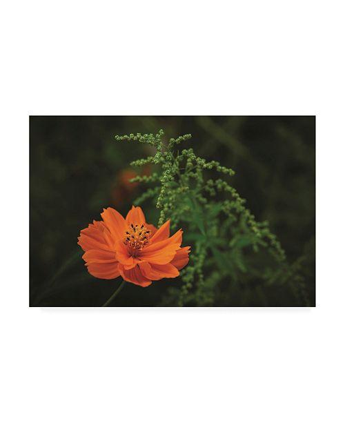 "Trademark Global Kurt Shaffer Photographs Orange and Green Canvas Art - 19.5"" x 26"""