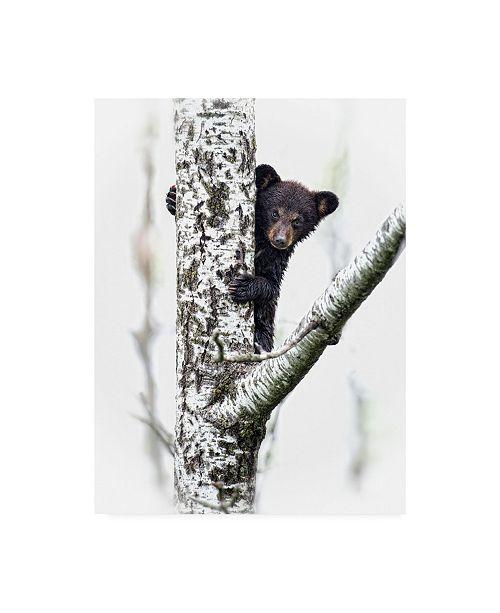 "Trademark Global PH Burchett Bears at Play V Canvas Art - 15"" x 20"""