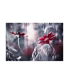 """Fabien Bravin Seduction Games Canvas Art - 37"""" x 49"""""""