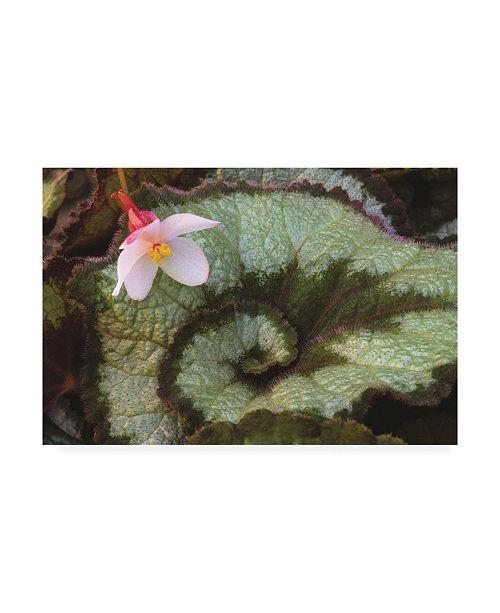 "Trademark Global Kurt Shaffer Swirling Nature of the Escargo Begonia Canvas Art - 15"" x 20"""