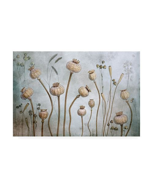 "Trademark Global Mandy Disher Papaver Canvas Art - 15"" x 20"""