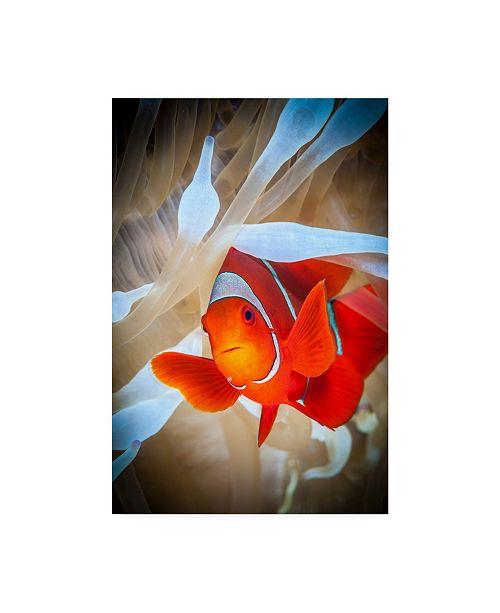 "Trademark Global Jan Abadschieff Clownfish Defends His White Anemone Canvas Art - 37"" x 49"""