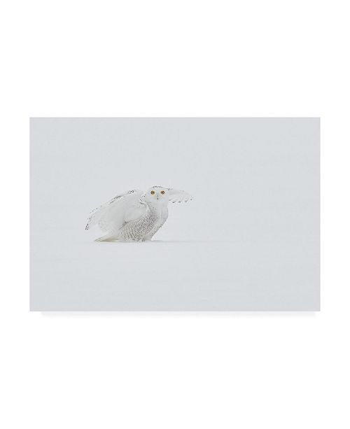 """Trademark Global Jim Luo White Ghost Canvas Art - 20"""" x 25"""""""