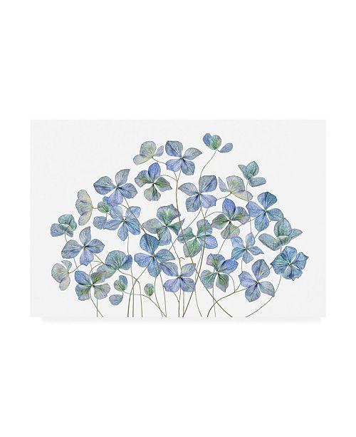 "Trademark Global Mandy Disher Hydrangea Blue Canvas Art - 20"" x 25"""