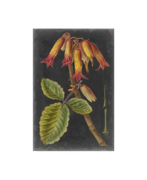 "Vision Studio Dramatic Tropical Iii Canvas Art - 36.5"" x 48"""