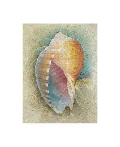 "Trademark Global Steve Hunziker Aquatica III Canvas Art - 19.5"" x 26"""