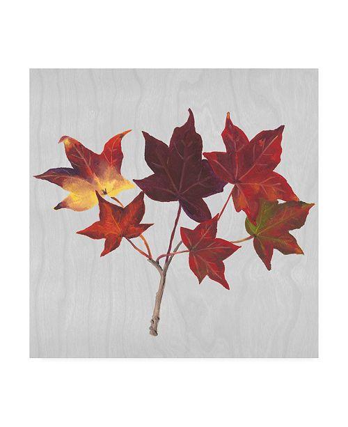 "Trademark Global Dianne Miller Floral Canvas Art - 15.5"" x 21"""