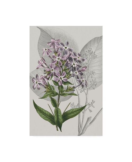 "Trademark Global Vision Studio Botanical Arrangement VI Canvas Art - 36.5"" x 48"""