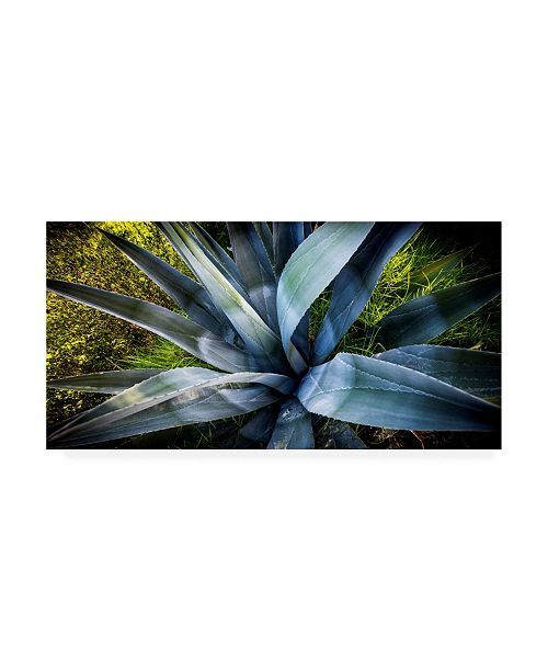 "Trademark Global Dan Ballard Agave Canvas Art - 15.5"" x 21"""