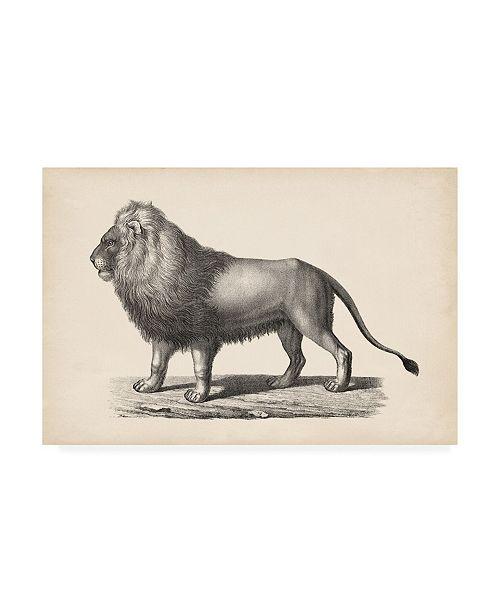 """Trademark Global Brodtmann Brodtmann Lion Canvas Art - 19.5"""" x 26"""""""