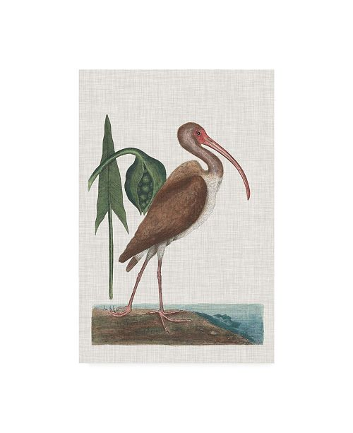 "Trademark Global Mark Catesby Catesby Heron V Canvas Art - 19.5"" x 26"""
