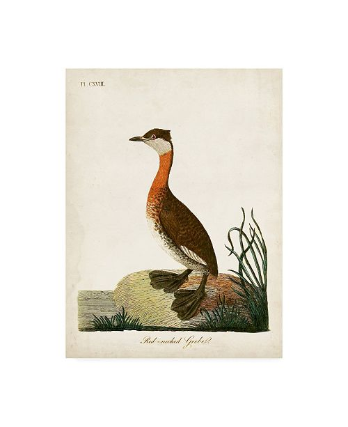 "Trademark Global John Latham Red-Necked Grebe Canvas Art - 19.5"" x 26"""