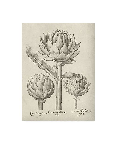 "Trademark Global Vision Studio Fresco Artichoke II Canvas Art - 19.5"" x 26"""