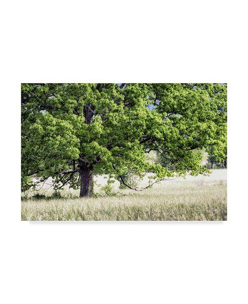 "Trademark Global Danny Head Green Tree in Summer Canvas Art - 20"" x 25"""