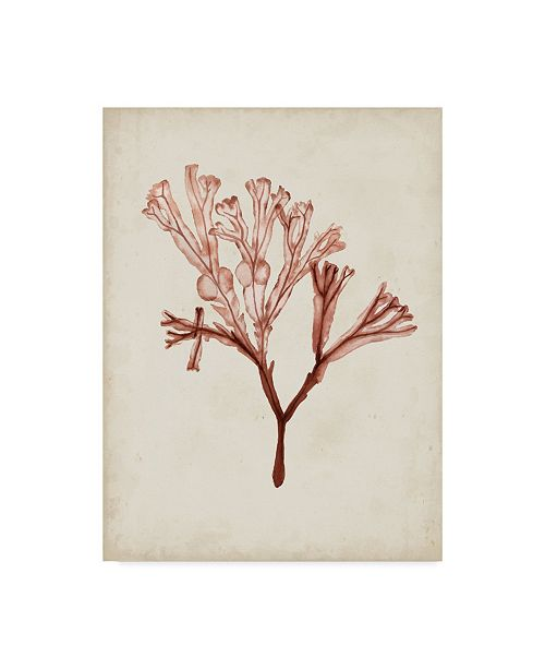 "Trademark Global Naomi Mccavitt Seaweed Specimens V Canvas Art - 15"" x 20"""