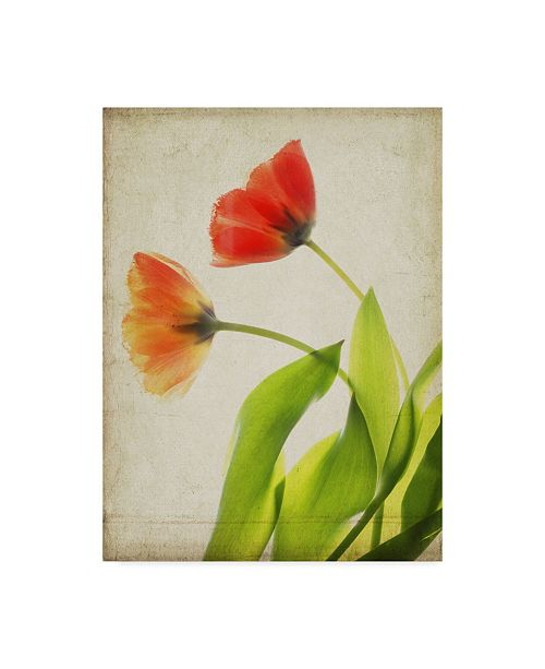 "Trademark Global Judy Stalus Parchment Flowers VI Canvas Art - 20"" x 25"""