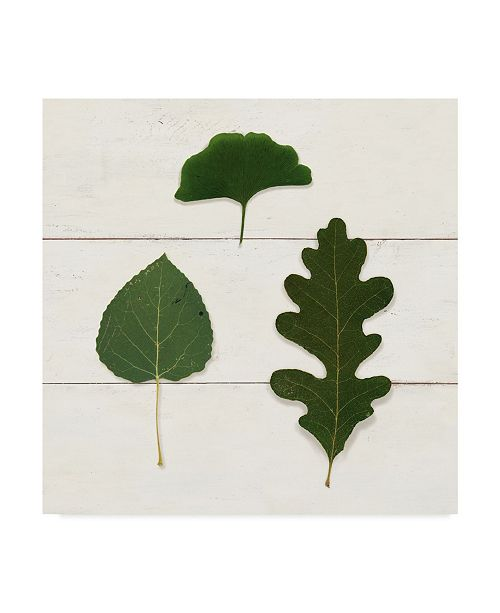 "Trademark Global Wild Apple Portfolio Leaf Chart III Shiplap Canvas Art - 15"" x 20"""