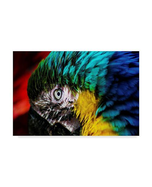 "Trademark Global Pixie Pics Macaws Eye Canvas Art - 20"" x 25"""