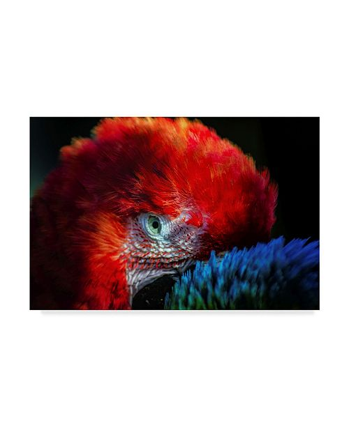 """Trademark Global Pixie Pics Colorful Macaw Couple Canvas Art - 37"""" x 49"""""""