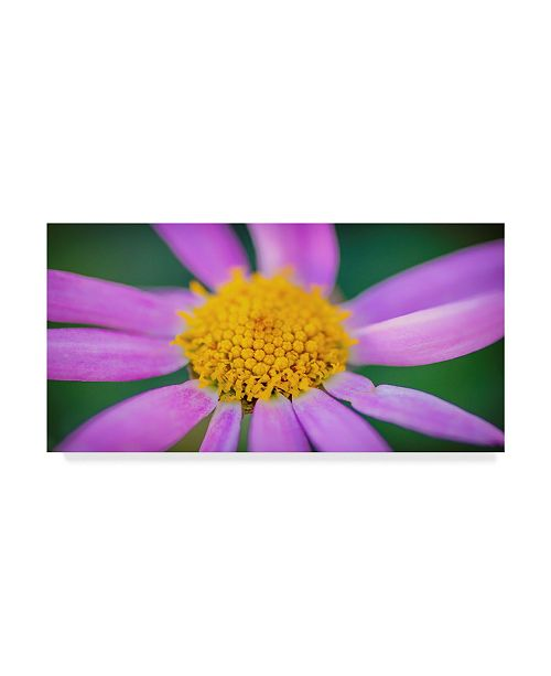 "Trademark Global Pixie Pics Pink Gerbera Canvas Art - 20"" x 25"""
