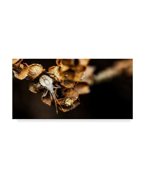 "Trademark Global Pixie Pics Shield Bug on Brown Leaves Canvas Art - 37"" x 49"""