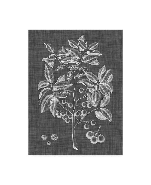 "Trademark Global Vision Studio Graphic Foliage VI Canvas Art - 20"" x 25"""