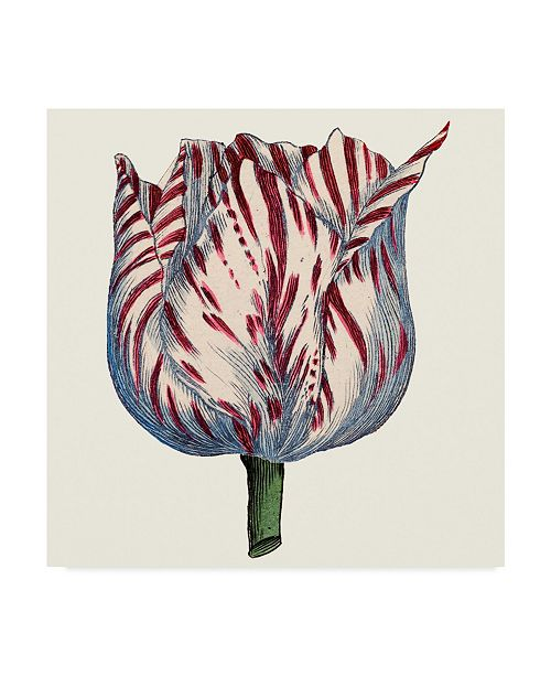 "Trademark Global Vision Studio Tulip Garden VI Canvas Art - 20"" x 25"""