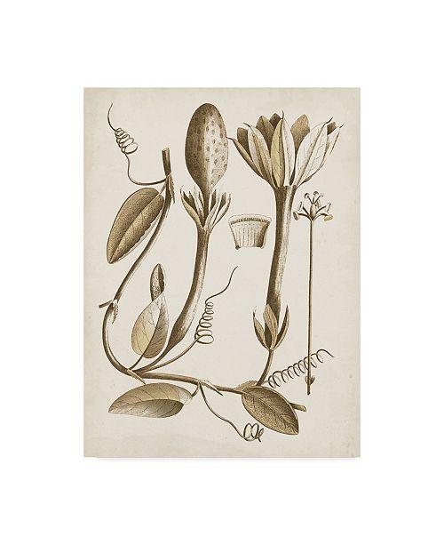 "Trademark Global Vision Studio Ochre Botanical IV Canvas Art - 15"" x 20"""