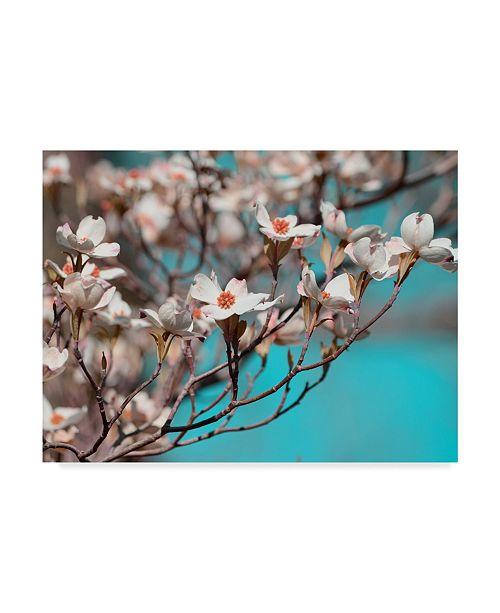 "Trademark Global Sharon Chandler Dogwood Spring III Canvas Art - 20"" x 25"""