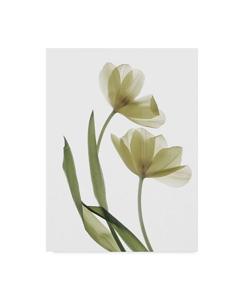 "Trademark Global Judy Stalus Xray Tulip I Canvas Art - 37"" x 49"""