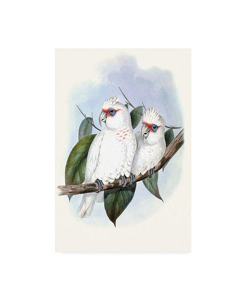 """Trademark Global John Gould Pastel Parrots IV Canvas Art - 37"""" x 49"""""""