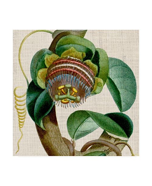 "Trademark Global Vision Studio Cropped Turpin Tropicals IV Canvas Art - 15"" x 20"""