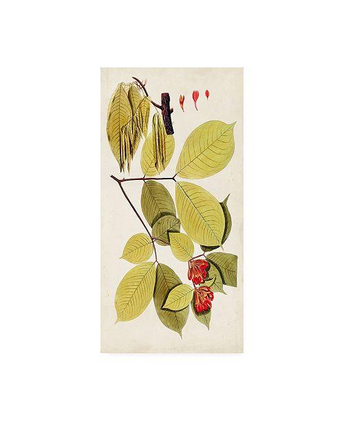 "Trademark Global Vision Studio Leaf Varieties II Canvas Art - 20"" x 25"""