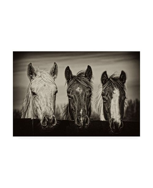"Trademark Global PH Burchett Three Amigos I Canvas Art - 37"" x 49"""