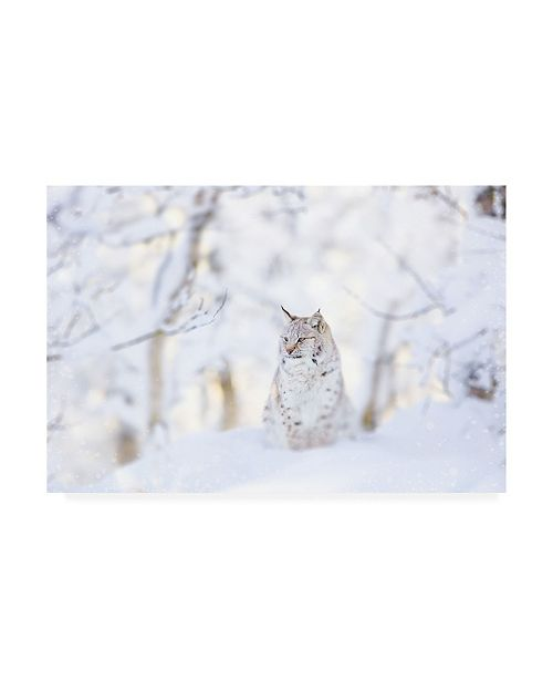 "Trademark Global PhotoINC Studio Snow lynx Canvas Art - 36.5"" x 48"""