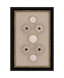 """Sea Urchin Sputnik Framed Wall Art, 18"""" x 12"""""""