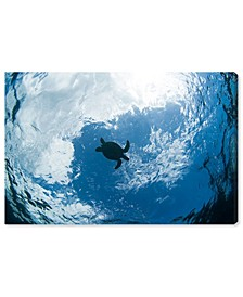 Green Sea Turtle From Below by David Fleetham Canvas Art Collection