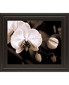 "Orchid Simplicity by Mark Castiglia Framed Print Wall Art, 22"" x 26"""