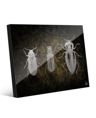 "Beetles in Grey on Olive Green 20"" x 24"" Acrylic Wall Art Print"