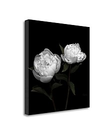 Peony Perfection I by Jeff Maihara Fine Art Giclee Print on Gallery Wrap Canvas