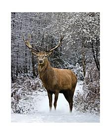 Inc Throw Knit Print Winter Deer