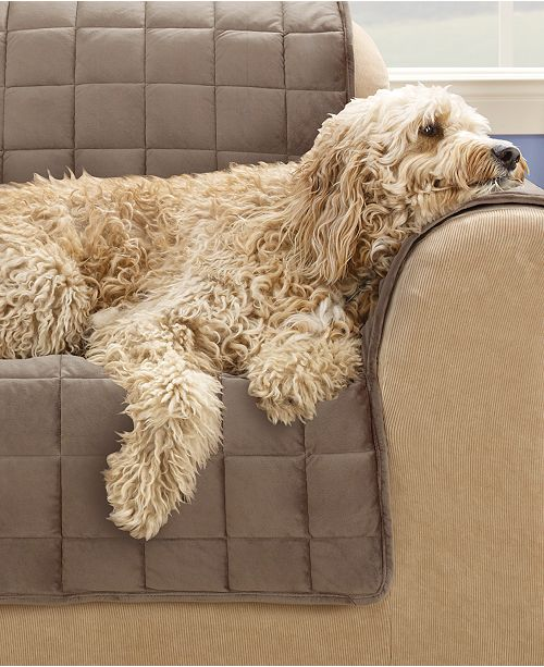 Sure Fit Velvet Deluxe Pet Chair Slipcover with Sanitize Odor Release