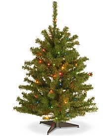 3' Eastern Spruce Tree With 50 Multicolor Lights