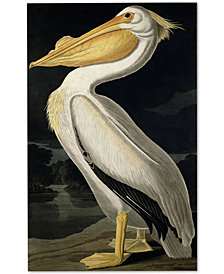 John James Audubon 'American White Pelican' Canvas Wall Art