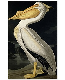 "John James Audubon 'American White Pelican' Canvas Art - 47"" x 30"""