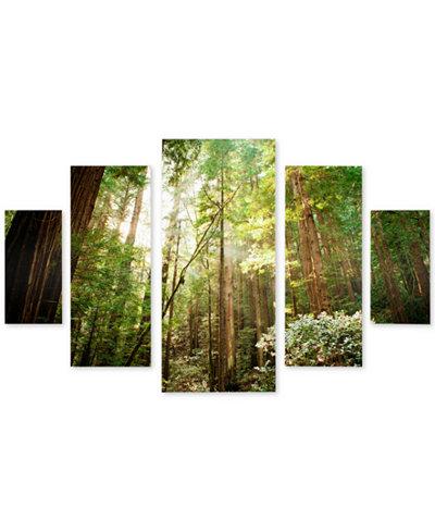 Ariane Moshayedi 'Muir Woods' Multi-Panel 5-Pc. Art Print Set