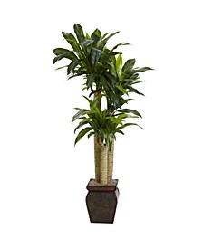 4.5' Cornstalk Dracaena Real Touch Artificial Plant in Vase